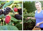 Leanne Blackberry