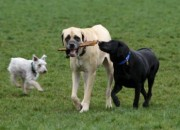dogpaw1